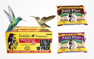 10 Best Suet for Birds 2019