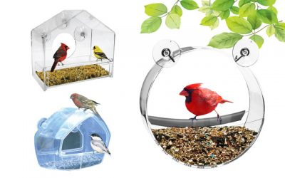 11 Top-Ranking Window Bird Feeder Items in 2019