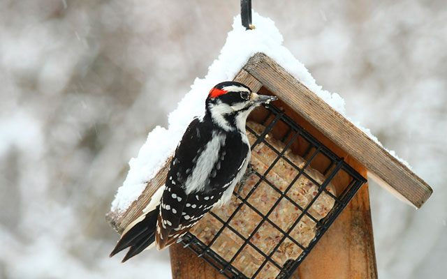 Best Suet Bird Feeder in 2019