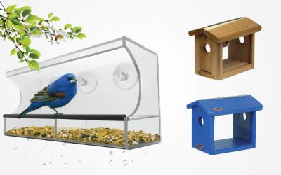 The Best Bluebird Feeders of 2019