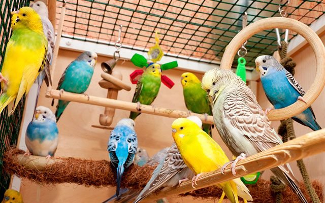 The Top 10 Best Parakeet Toys To Buy in 2019